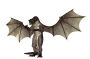 dragon-1814055_1280.png